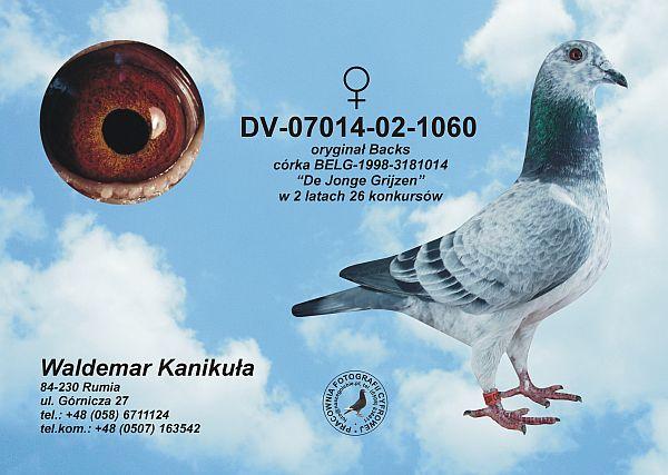Forum Pzhgp Zobacz Temat Sprzedam Niezawodne Gołębie Na Każdym